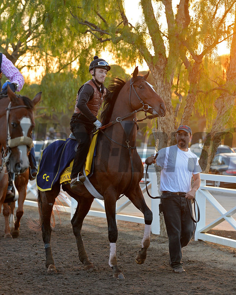 Caption:  Tonalist coming out of the paddock<br /> Scenes at Santa Anita  on Oct. 30, 2014, in preparation for Breeders' Cup  in California.<br /> 1Origs10_30_14 image890<br /> Photo by Anne M. Eberhardt