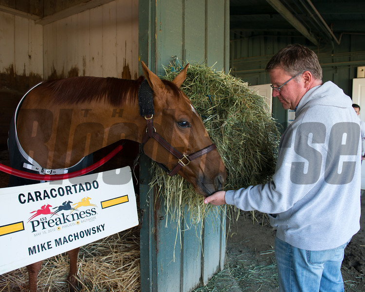 Caption:  Caracortado gets fed Skittles from trainer Mike Machowsky<br /> Breeders' Cup horses and connections at Santa Anita near Acadia, California, preparing for Breeders' Cup raceways on Nov. 1 and Nov. 2, 2013.<br /> BCWorks03RAW_10_30_13 468Photo by Anne M. Eberhardt