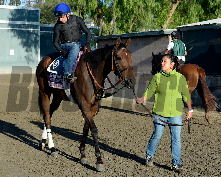 Caption:  Cristina's Journey<br /> Scenes at Santa Anita  on Oct. 29, 2014, in preparation for Breeders' Cup  in California.<br /> 1Origs10_29_14 image771<br /> Photo by Anne M. Eberhardt