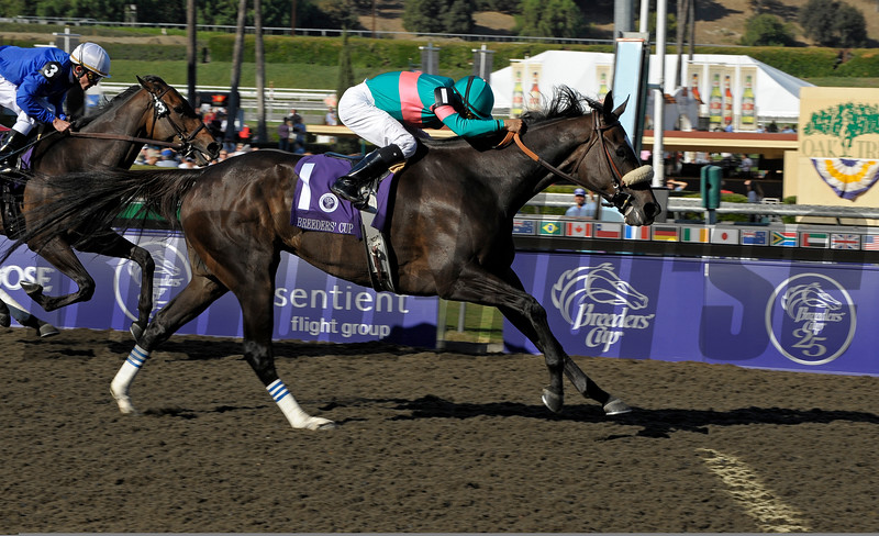 Caption: <br /> Zenyatta with Mike Smith wins the Breeders' Cup Ladies Classic (gr. I)  on October 24, 2008, at Santa Anita in Arcadia, California. Cocoa Beach with Ramon Dominguez in second.<br /> Race7LadiesClassic  image536<br /> Poto by Anne M. Eberhardt