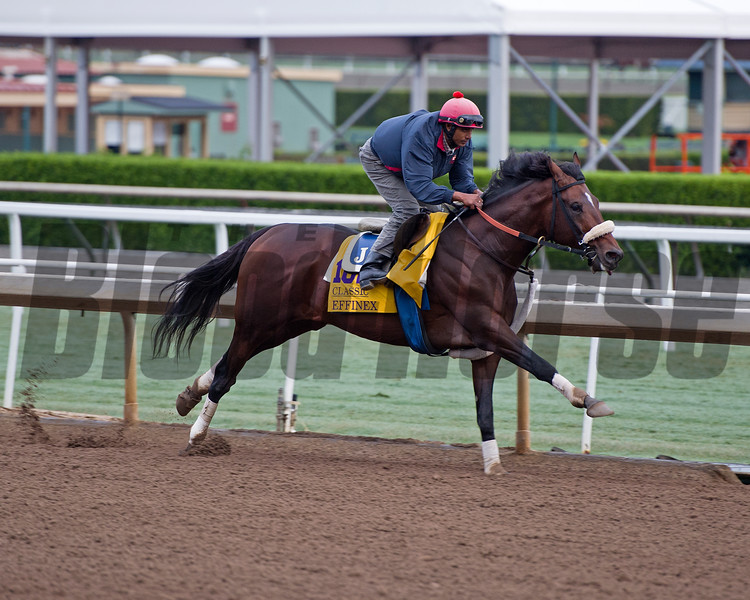 Effinex<br /> Works at Santa Anita in preparation for 2016 Breeders' Cup on Oct. 31, 2016, in Arcadia, CA.