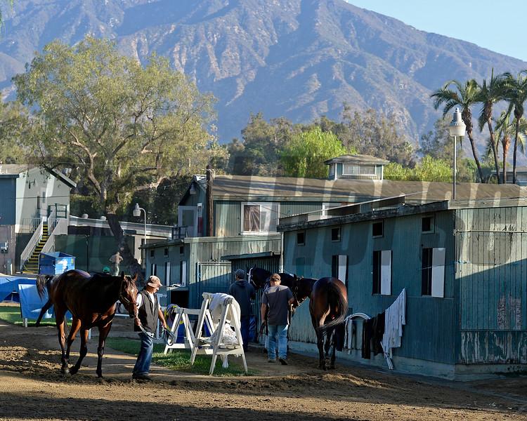 Caption:  barn area scene<br /> Scenes at Santa Anita  on Oct. 27, 2014, in preparation for Breeders' Cup  in California.<br /> 1Origs10_28_14 image478<br /> Photo by Anne M. Eberhardt