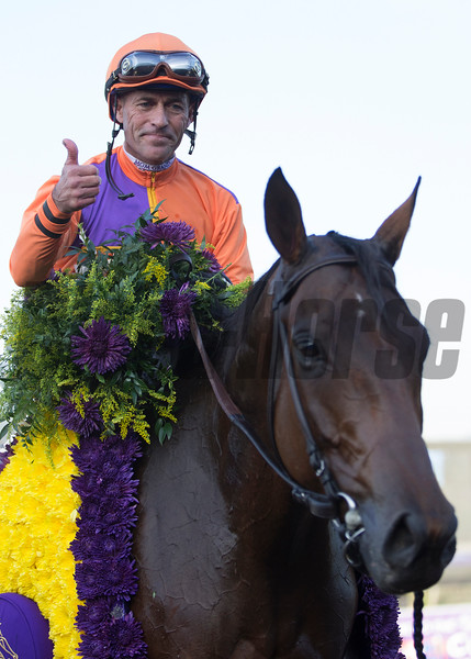 Beholder and Gary Stevens after winning the  Longines Breeders Cup Distaff at Santa Anita on 11/4/16