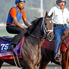 Caption:  My Conquestadory<br /> Breeders' Cup horses and connections at Santa Anita near Acadia, California, preparing for Breeders' Cup raceways on Nov. 1 and Nov. 2, 2013.<br /> BCWorks02Jpegs_10_27_13 image965<br /> Photo by Anne M. Eberhardt