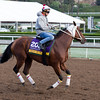 Corona Del Inca, Distaff<br /> Works at Santa Anita in preparation for 2016 Breeders' Cup on Oct. 29 2016, in Arcadia, CA.