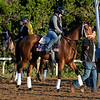 Caption:  Angela Renee<br /> Scenes at Santa Anita  on Oct. 27, 2014, in preparation for Breeders' Cup  in California.<br /> 1Origs10_28_14 image267<br /> Photo by Anne M. Eberhardt