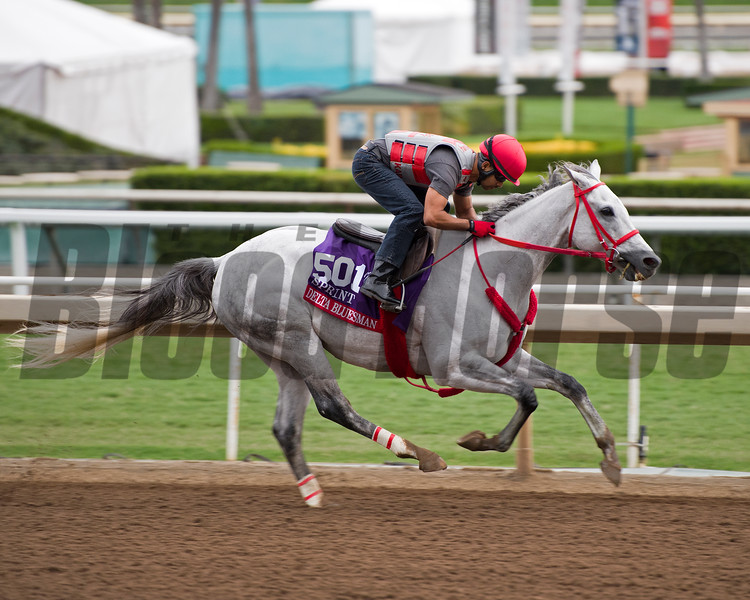 Delta Bluesman<br /> Works at Santa Anita in preparation for 2016 Breeders' Cup on Oct. 30, 2016, in Arcadia, CA.