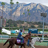 OM<br /> Works at Santa Anita in preparation for 2016 Breeders' Cup on Oct. 29 2016, in Arcadia, CA.