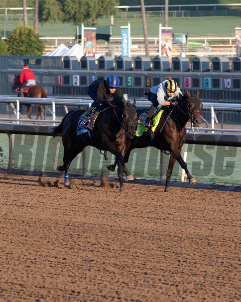Eight Rings, outside, with unraced maiden<br /> at  Oct. 27, 2019 Santa Anita in Arcadia, CA.