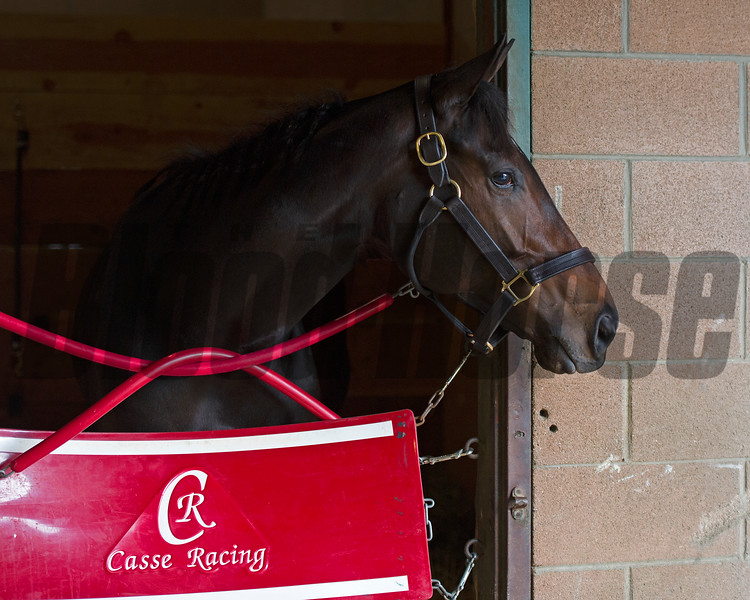 Tepin<br /> Works at Santa Anita in preparation for 2016 Breeders' Cup on Nov. 1, 2016, in Arcadia, CA.