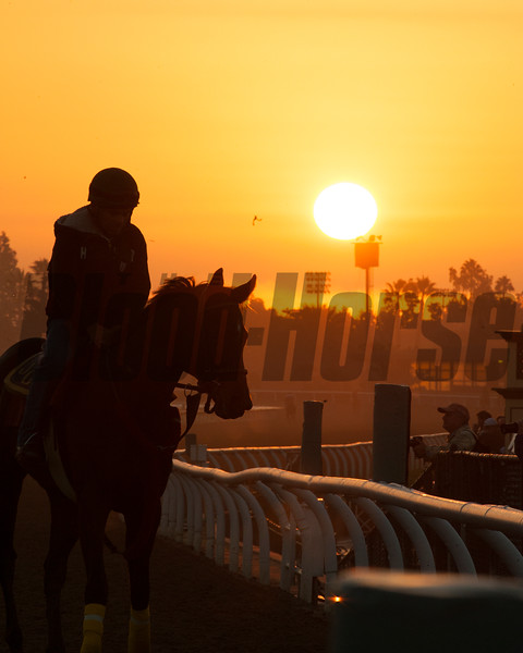 Caption:  Sunrise<br /> Breeders' Cup horses and connections at Santa Anita near Acadia, California, preparing for Breeders' Cup raceways on Nov. 1 and Nov. 2, 2013.<br /> BCWorks02RAW_10_27_13 image854<br /> Photo by Anne M. Eberhardt
