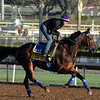 Caption:  Imperative<br /> Scenes at Santa Anita  on Oct. 27, 2014, in preparation for Breeders' Cup  in California.<br /> 1Origs10_28_14 image402<br /> Photo by Anne M. Eberhardt