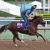 OM, Turf Sprint<br /> Works at Santa Anita in preparation for 2016 Breeders' Cup on Oct. 29 2016, in Arcadia, CA.