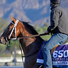 Caption:  Alpha<br /> Breeders' Cup horses and connections at Santa Anita near Acadia, California, preparing for Breeders' Cup raceways on Nov. 1 and Nov. 2, 2013.<br /> BCWorks1Jpegs_10_29_13 image460<br /> Photo by Anne M. Eberhardt