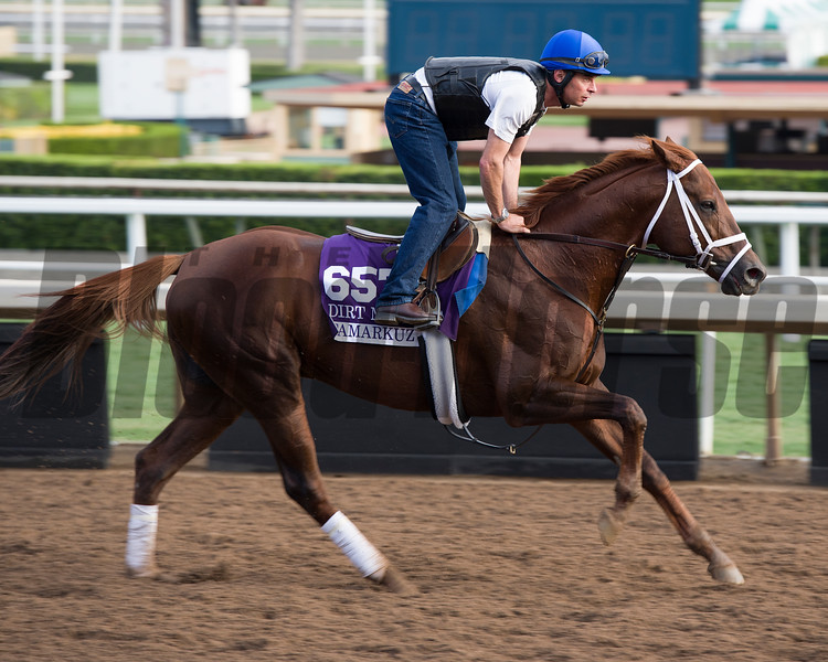 Tamarkuz<br /> Works at Santa Anita in preparation for 2016 Breeders' Cup on Nov. 1, 2016, in Arcadia, CA.