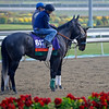 Caption:  Mizdirection with Mike Smith<br /> Breeders' Cup horses and connections at Santa Anita near Acadia, California, preparing for Breeders' Cup raceways on Nov. 1 and Nov. 2, 2013.<br /> BCWorks01_10_25_13 JPEGSimage541<br /> Photo by Anne M. Eberhardt