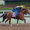 Accelerate<br /> Works at Santa Anita in preparation for 2016 Breeders' Cup on Oct. 29 2016, in Arcadia, CA.