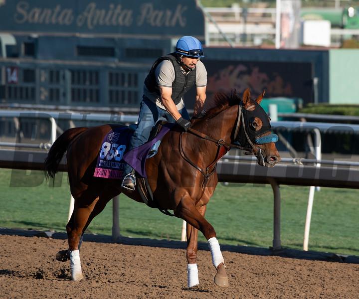 Fair Maiden<br /> Horses and scenes at  Oct. 26, 2019 Santa Anita in Arcadia, CA.
