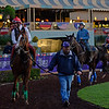 Caption:  Alan Sherman schools California Chrome<br /> Scenes at Santa Anita  on Oct. 27, 2014, in preparation for Breeders' Cup  in California.<br /> 1Origs10_28_14 image98<br /> Photo by Anne M. Eberhardt