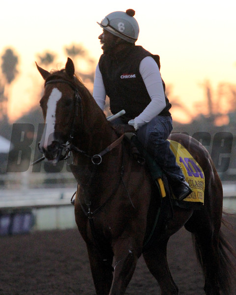 California Chrome Breeders' Cup Classic Chad B. Harmon