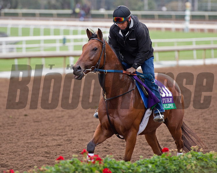 Twilight Eclipse<br /> Works at Santa Anita in preparation for 2016 Breeders' Cup on Nov. 1, 2016, in Arcadia, CA.