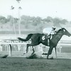 Native Diver wins the San Carlos Handicap with jockey Jerry Lambert up at Santa Anita Park on January 7, 1967.