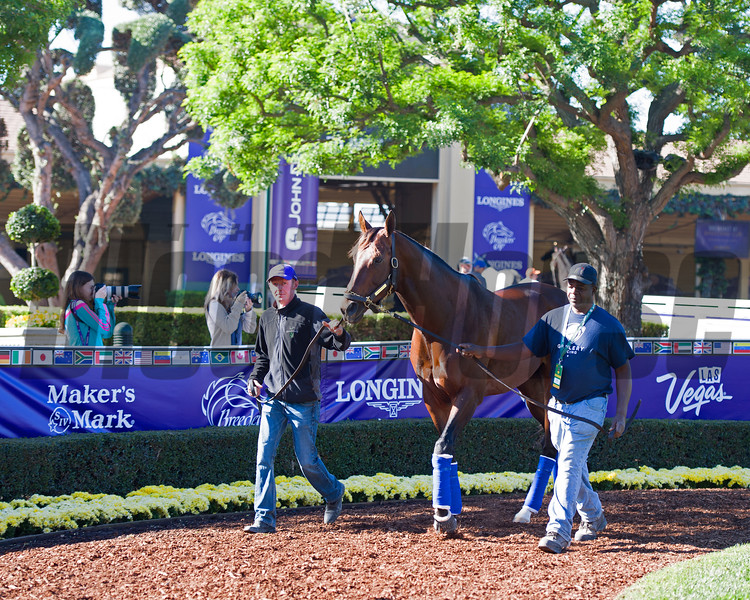 Runhappy<br /> Morning scenes at Santa Anita in preparation for 2016 Breeders' Cup on Nov. 2, 2016, in Arcadia, CA.