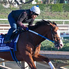 Snapper Sinclair<br /> at  Oct. 28, 2019 Santa Anita in Arcadia, CA.