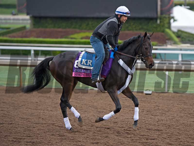 Spain Burg<br /> Works at Santa Anita in preparation for 2016 Breeders' Cup on Oct. 31, 2016, in Arcadia, CA.