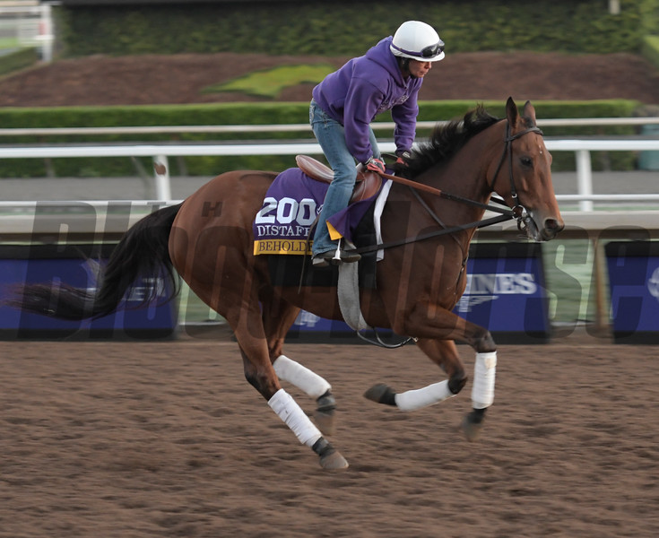 Beholder gallops at Santa Anita Nov. 2, 2016 in preparation for her appearance in the Breeders' Cup in Arcadia, California.  Photo by Skip Dickstein