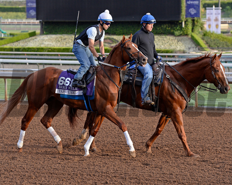 Tapiture on track on Oct. 26, 2014, at Santa Anita in preparation for the Breeders' Cup.<br /> Anne M. Eberhardt photo