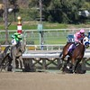 She' A Tiger (pink) leads the field around the turn in the Breeders' Cup Juvenile Fillies (G. I) on November 2, 2013. She's A Tiger was disqualified for bumping Ria Antonia (green, left), who won the race. Photo by Crawford Ifland.