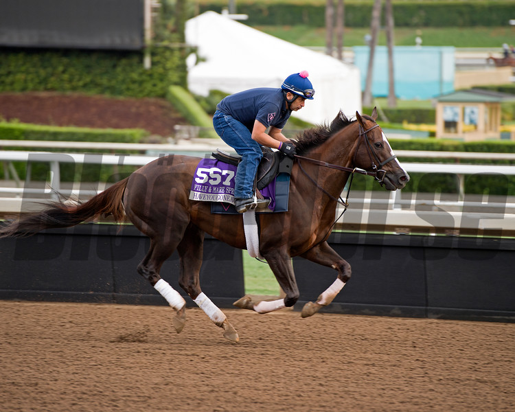 Haveyougoneaway<br /> Works at Santa Anita in preparation for 2016 Breeders' Cup on Nov. 1, 2016, in Arcadia, CA.