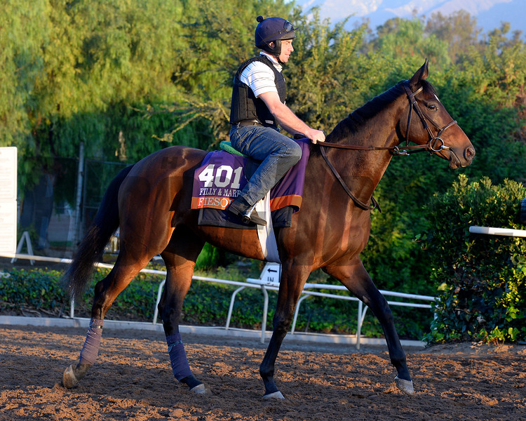 Caption:  Fiesolana<br /> Scenes at Santa Anita  on Oct. 27, 2014, in preparation for Breeders' Cup  in California.<br /> 1Origs10_28_14 image203<br /> Photo by Anne M. Eberhardt