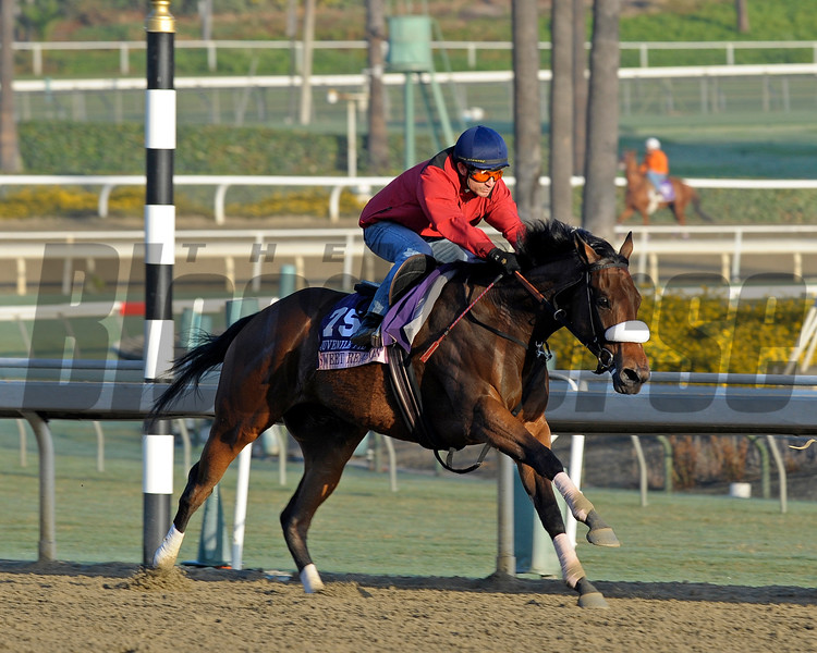 Caption:  Sweet Reason with Alex Solis works<br /> Breeders' Cup horses and connections at Santa Anita near Acadia, California, preparing for Breeders' Cup raceways on Nov. 1 and Nov. 2, 2013.<br /> BCWorks02Jpegs_10_27_13 image917<br /> Photo by Anne M. Eberhardt