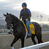 Caption:  Ron the Greek<br /> Breeders' Cup horses and connections at Santa Anita near Acadia, California, preparing for Breeders' Cup raceways on Nov. 1 and Nov. 2, 2013.<br /> BCWorks1Jpegs_10_29_13 image334<br /> Photo by Anne M. Eberhardt