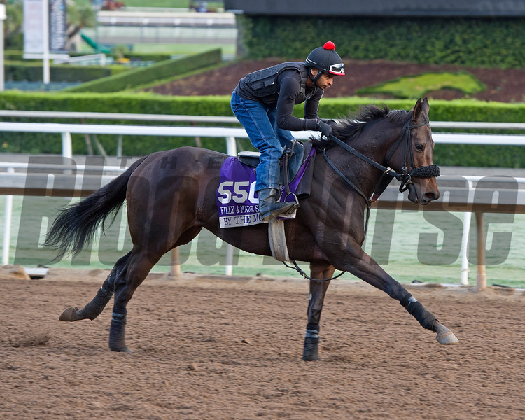 By the Moon, Filly and Mare Sprint<br /> Works at Santa Anita in preparation for 2016 Breeders' Cup on Oct. 29 2016, in Arcadia, CA.