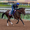 Flying Tipat on Oct. 26, 2014, at Santa Anita in preparation for the Breeders' Cup.<br /> 2Origs10_26_14 image494<br /> Anne M. Eberhardt photo