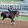 Green Mask<br /> Works at Santa Anita in preparation for 2016 Breeders' Cup on Nov. 1, 2016, in Arcadia, CA.