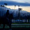 Morning work scene on Oct. 26, 2014, at Santa Anita in preparation for the Breeders' Cup.<br /> Anne M. Eberhardt photo