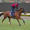 Home of the Brave<br /> Works at Santa Anita in preparation for 2016 Breeders' Cup on Nov. 1, 2016, in Arcadia, CA.