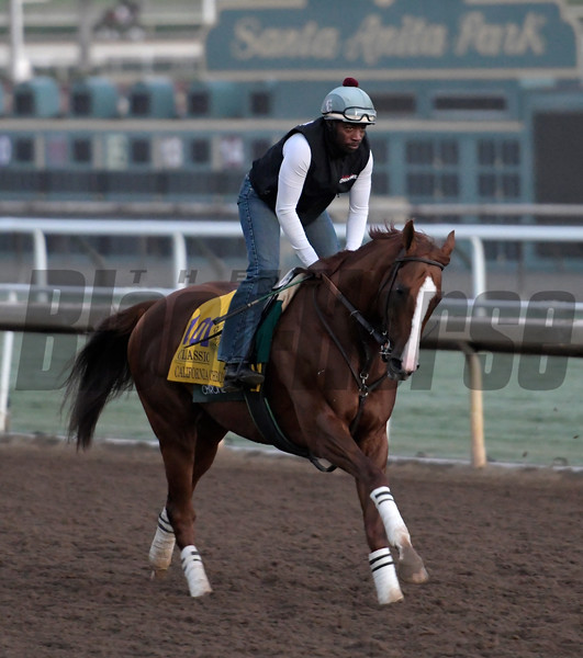 California Chrome gallops at Santa Anita Nov. 2, 2016 in preparation for his appearance in the Breeders' Cup in Arcadia, California.  Photo by Skip Dickstein