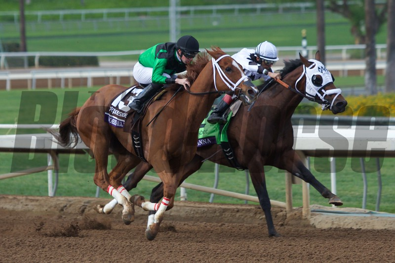 Work All Week battled with Fast Anna around the final turn to win the Breeders' Cup Sprint (G. I) on November 1, 2014.