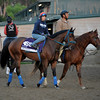 Caption:  Obviously<br /> Breeders' Cup horses and connections at Santa Anita near Acadia, California, preparing for Breeders' Cup raceways on Nov. 1 and Nov. 2, 2013.<br /> BCWorks1Jpegs_10_29_13 image370<br /> Photo by Anne M. Eberhardt