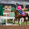Nuovo Record<br /> Works at Santa Anita in preparation for 2016 Breeders' Cup on Nov. 1, 2016, in Arcadia, CA.