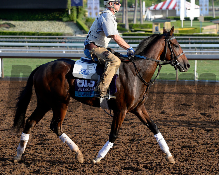 Caption:  Lawn Ranger<br /> Scenes at Santa Anita in preparation for Breeders' Cup  in California on Oct. 27, 2014.<br /> 1Origs10_27_14 image832<br /> Photo by Anne M. Eberhardt