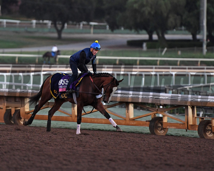 Lull<br /> Morning scenes at Santa Anita in preparation for 2016 Breeders' Cup on Nov. 2, 2016, in Arcadia, CA.