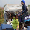 Caption:  Danny Boy<br /> Scenes at Santa Anita in preparation for Breeders' Cup  in California on Oct. 27, 2014.<br /> 1Origs10_27_14 image598<br /> Photo by Anne M. Eberhardt