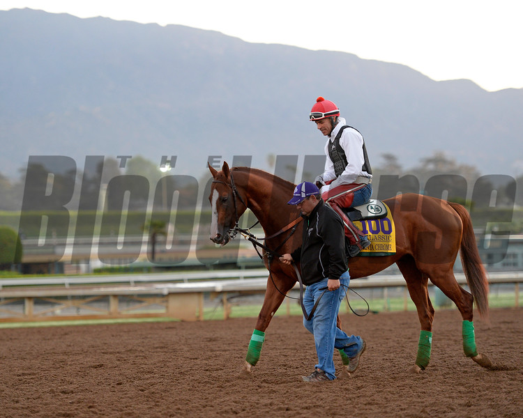 Caption:  California Chrome<br /> Scenes at Santa Anita  on Oct. 29, 2014, in preparation for Breeders' Cup  in California.<br /> 1Origs10_29_14 image533<br /> Photo by Anne M. Eberhardt