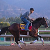 War of Will<br /> at  Oct. 28, 2019 Santa Anita in Arcadia, CA.